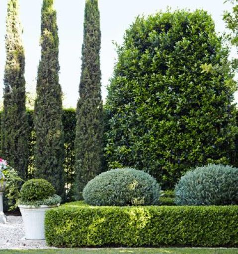 Boxwood Hedges via HB