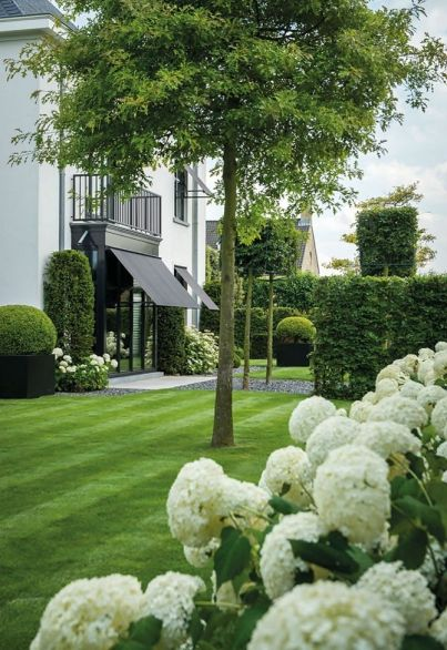 Hydrangea gardens and a fresh green lawn