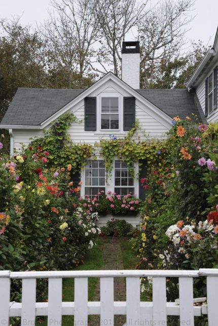 A sweet cottage covered in roses