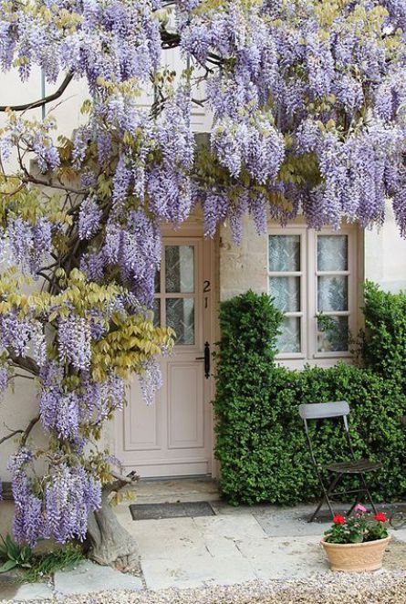 Wisteria covered home entry