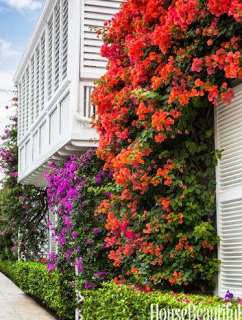 Who needs paint when you have bougainvillea?A great Palm Beach home by Mimi McMakin via House Beautiful