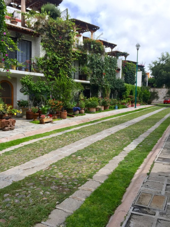 San Miguel de Allende The Potted Boxwood 48