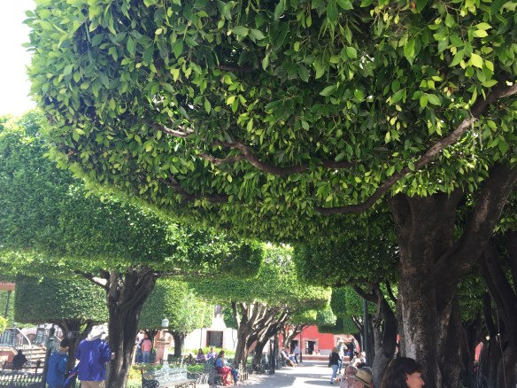 San Miguel de Allende The Potted Boxwood 58