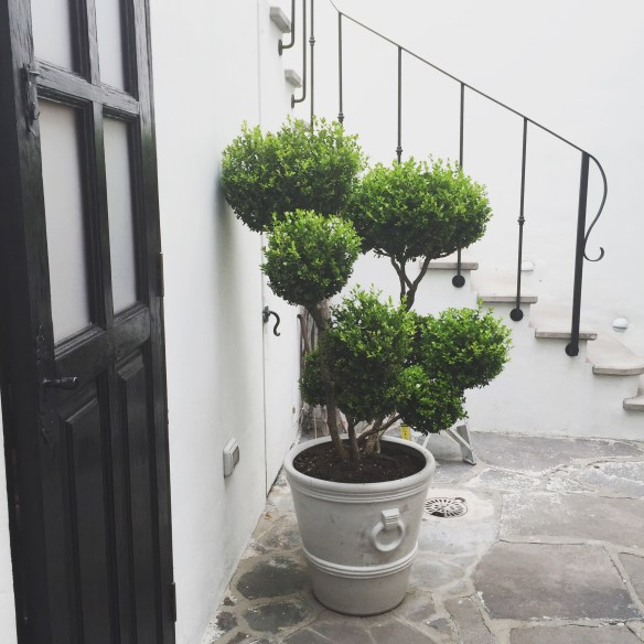 San Miguel de Allende The Potted Boxwood 60