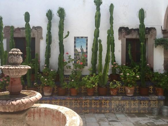 San Miguel de Allende The Potted Boxwood 67
