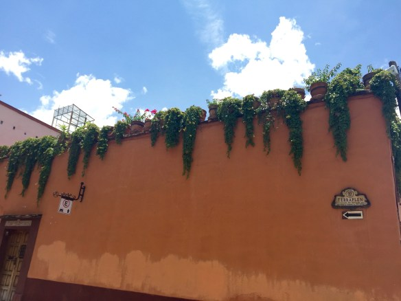 San Miguel de Allende The Potted Boxwood 76