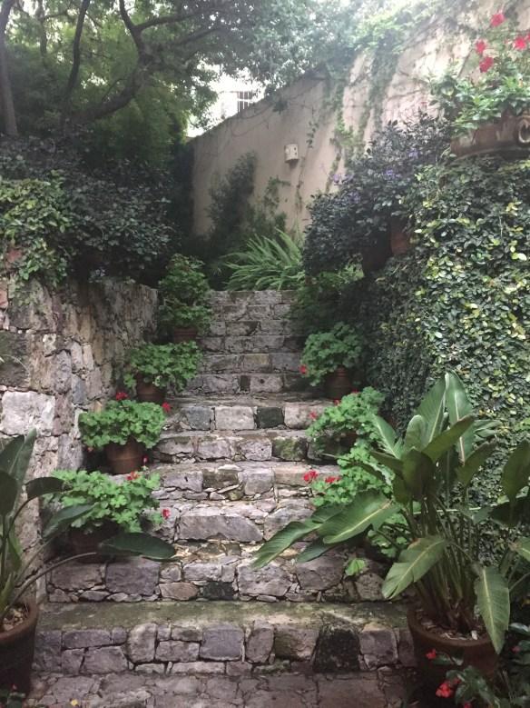 San Miguel de Allende The Potted Boxwood 78