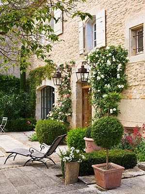 Semini boxwood the potted boxwood for French country courtyard