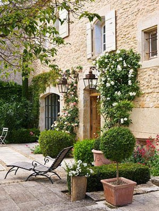 Semini boxwood the potted boxwood for French style courtyard ideas