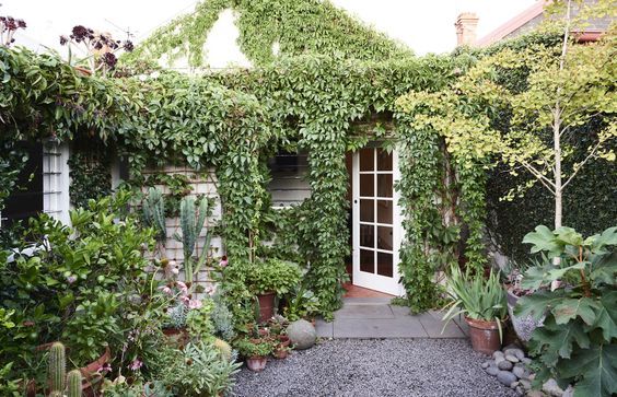 Ivy covered courtyard via thedesignfiles