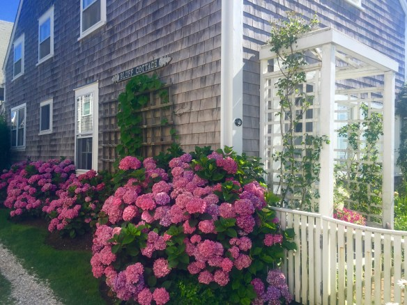 Photos of Nantucket by Christina Dandar for The Potted Boxwood 2