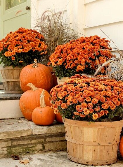 fall-pumpkins-vi-pinterest