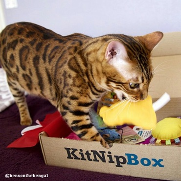 knip-box-photo-by_bensonthebengal