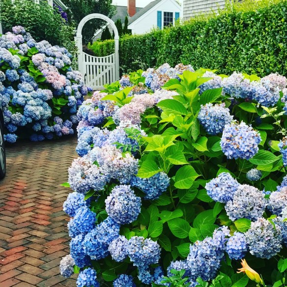 Nantucket home photo by christina dandar for The Potted Boxwood 21