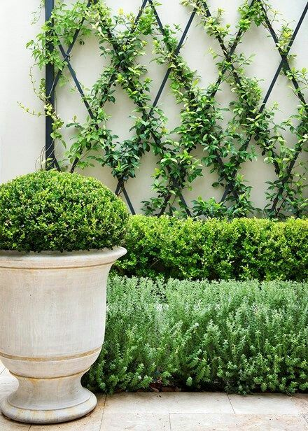 espalier and boxwood
