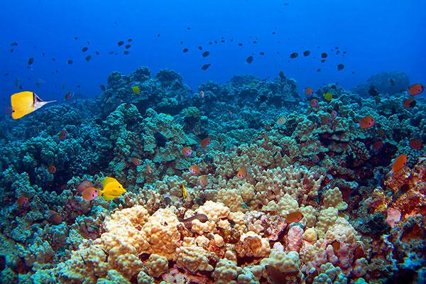 Molokini Reef Maui