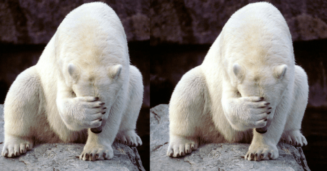 polar bear double facepalm