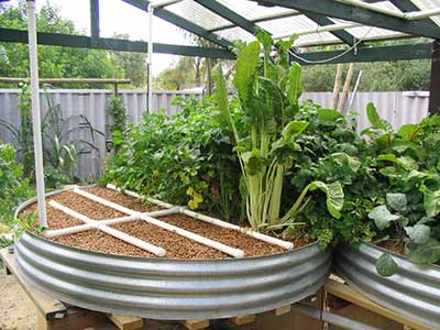 Aquaponics, small livestock and gardens combined could feed your family.