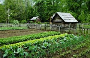 HomesteadingGarden