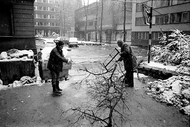 People cut down fallen branches to burn for heat.