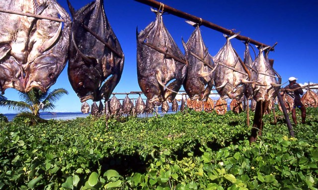 People from Norway to Madagascar still air dry fish.