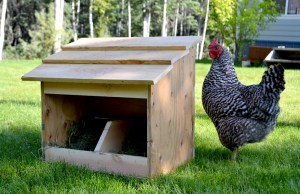 10-diy-projects-for-chicken-nesting-containers-6