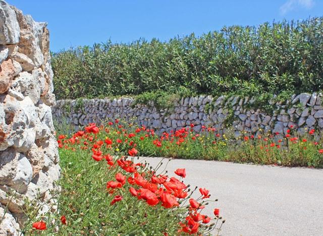 Spring flowers in Menorca - image zoedawes