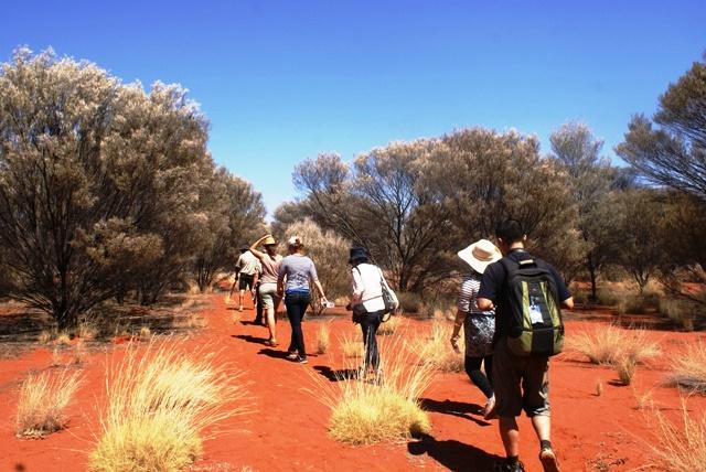 Bush tucker foraging Australia - zoedawes