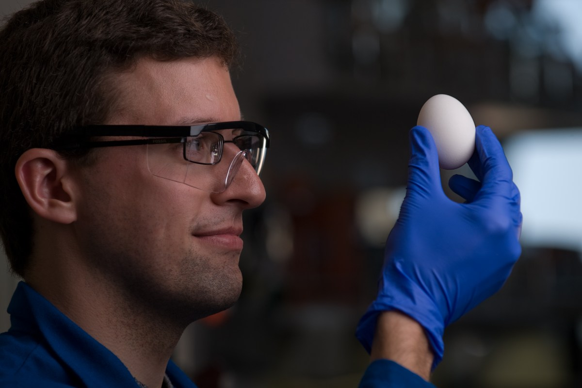 Chemistry major Stephan Kudlacek and professor Greg Weiss have developed a way of unboiling a hen egg.  Steve Zylius/UC Irvine Communications