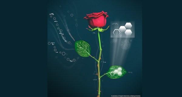 electronic-rose