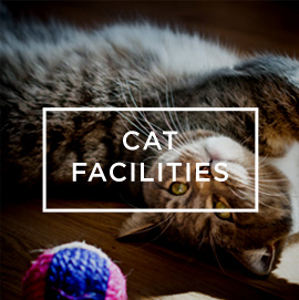 cat-facilities