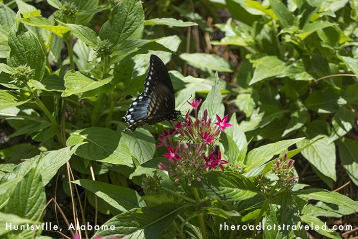 Butterfly in Huntsville Botanical Garden in Huntsville, Alabama