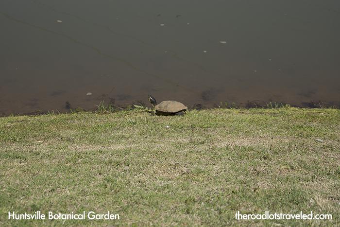 Turtle in Huntsville Botanical Garden