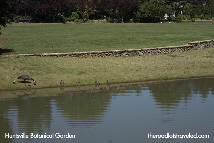 Turtles and Ducks along Little Smith Lake in Huntsville Botanical Garden