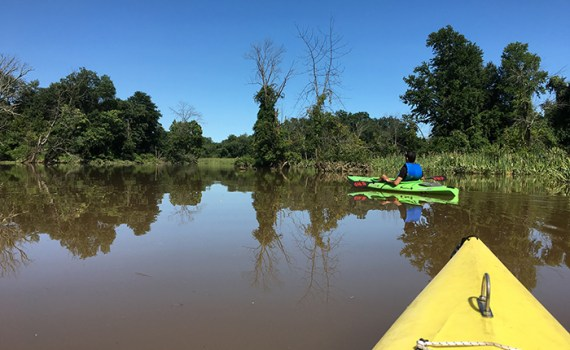 Kayaking through Kenilworth Park & Aquatic Gardens