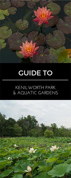 Guide to Kenilworth Park & Aquatic Gardens in Washington, DC