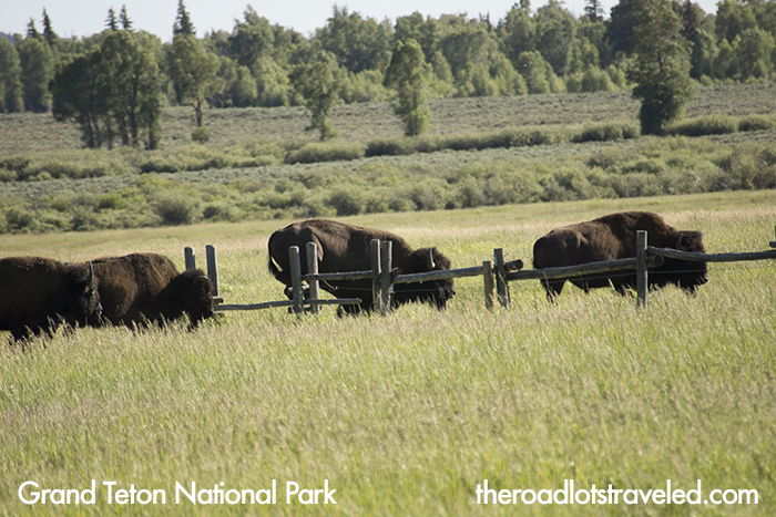 Elk Ranch, Grand Teton National Park Photo Spots