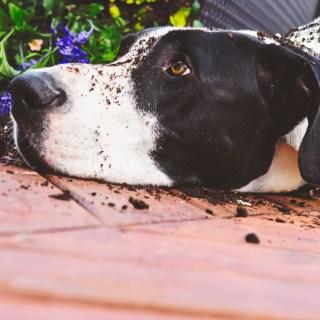 DogFlowerPot_Slide
