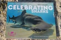 2015 Celebrating Sharks Calendar