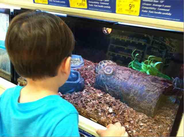 Me Gusta Me Gusta Cargando Relacionado. Fish Pet Stores Near Me. View