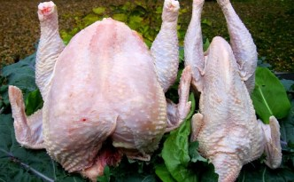 Comparison of a Cornish Rock hen to a Production Red hen.