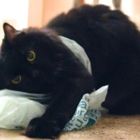Danger of plastic bags