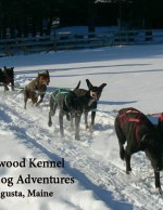 Heywood Kennel Sled Dog Adventures