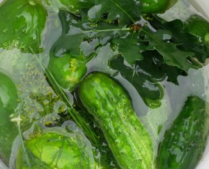 Cucumbers magically ferment in salted water
