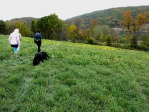 Needed: a vehicle to negotiate hillside pastures