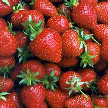 Strawberries for school lunch