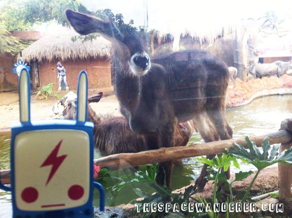 malang-017-batu-secret-zoo
