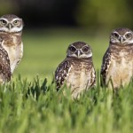 Burrowing Owl Killed In New Mexico; Death Leads To Police Patrol