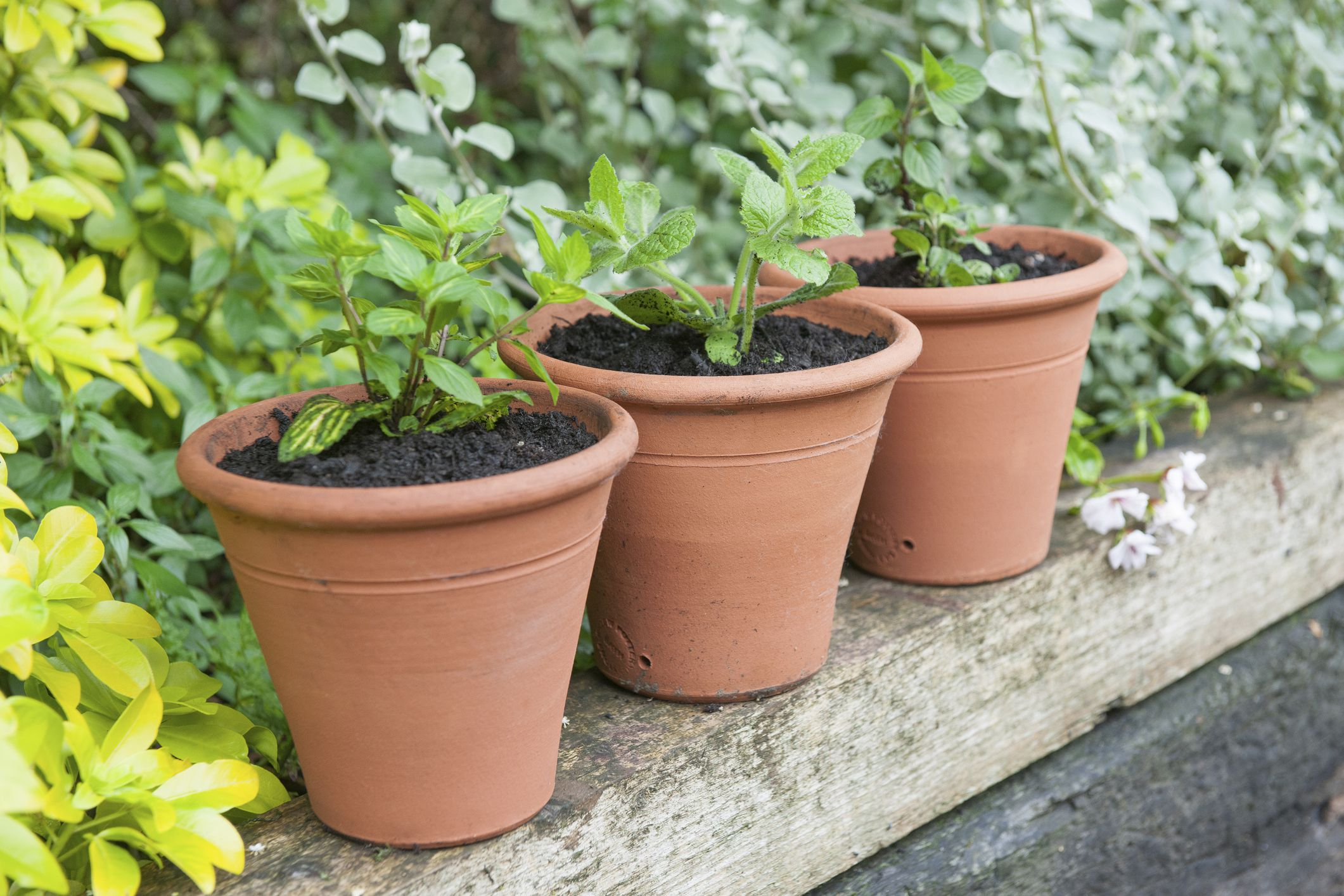 Modern Potrisers Disappearing Pot Feet Cheap Plant Pots Adelaide