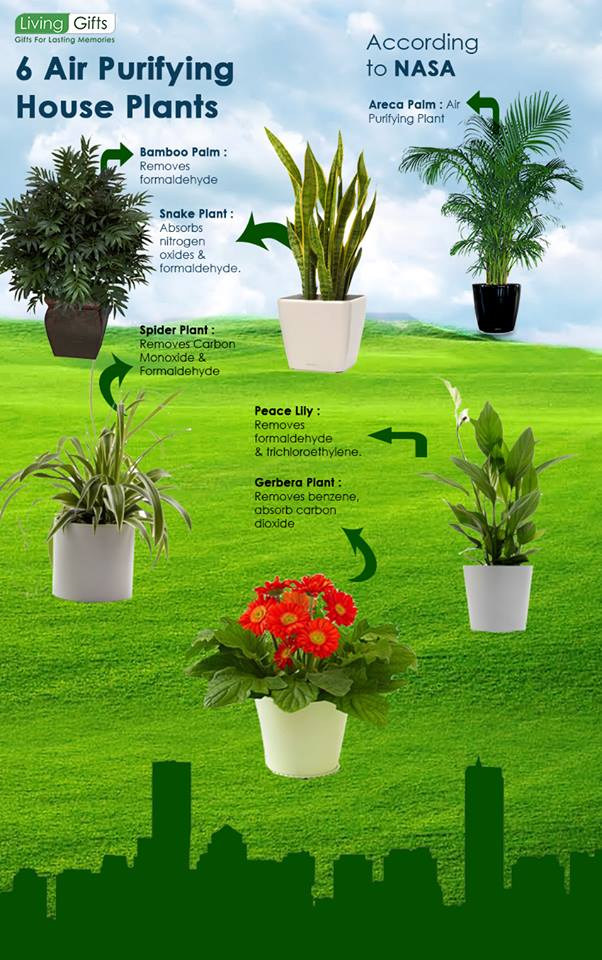 6-air-purifying-plants